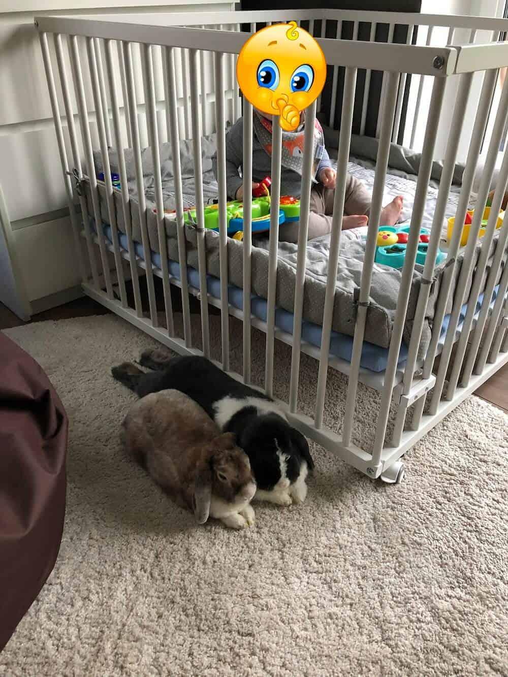 Während der kleine Mann im Laufgitter sitzt und spielt, machen die Kaninchen es sich davor gemütlich